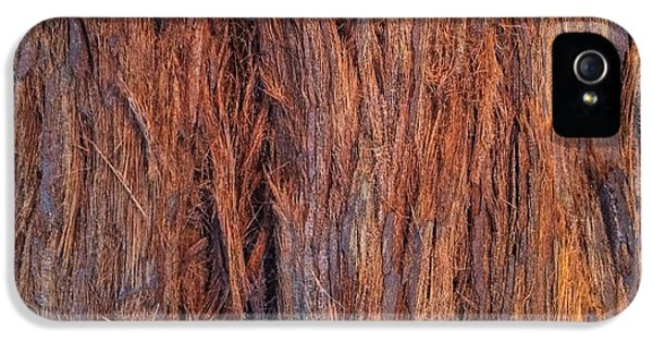 Shaggy Bark IPhone 5 Case by Sandy Taylor