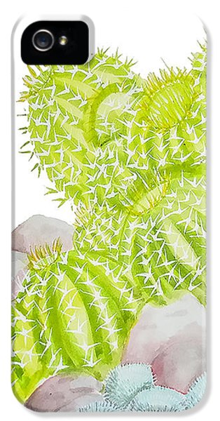 Barrel Cactus IPhone 5 Case by Roleen Senic