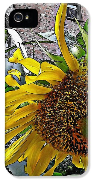Barrio Sunflower 3 IPhone 5 Case