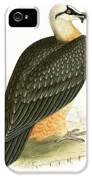 Bearded Vulture IPhone 5 Case