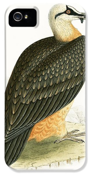 Bearded Vulture IPhone 5 Case by English School