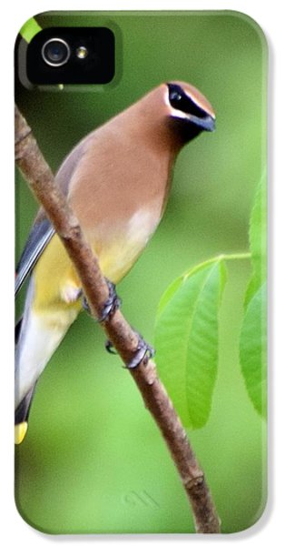 Beautiful Cedar Wax Wing  IPhone 5 / 5s Case by Sheri McLeroy