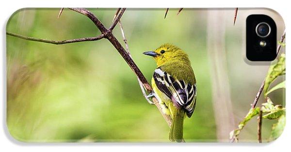 Beautiful Common Iora IPhone 5 Case by Vishwanath Bhat