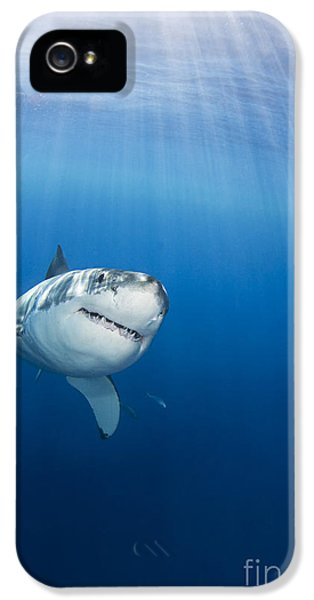 Beautiful Great White IPhone 5 Case by Dave Fleetham - Printscapes