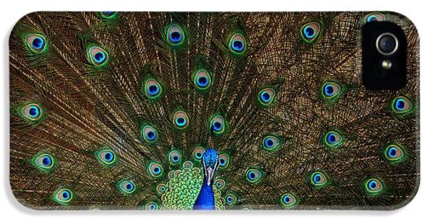 Beautiful Peacock IPhone 5 Case