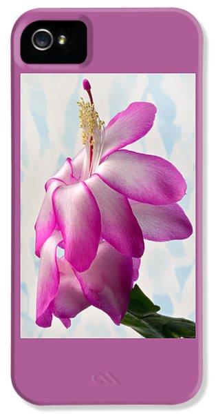 Beautiful Schlumbergera. IPhone 5 Case by Terence Davis