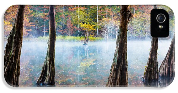 Beavers Bend Cypress Grove IPhone 5 Case by Inge Johnsson