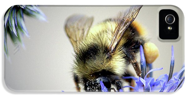 Bee In A Bubble IPhone 5 / 5s Case by Sharon Talson