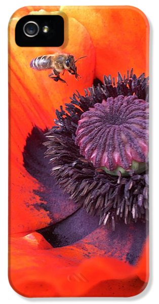 iPhone 5 Case - Bee Is Visiting A Poppy by Orphelia Aristal