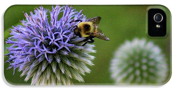 Bee On Globe Thistle IPhone 5 Case by Karen Adams