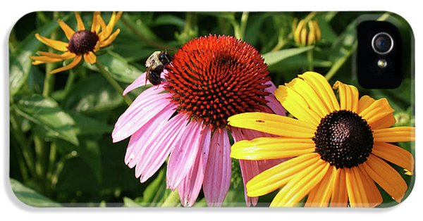 Bee On The Cone Flower IPhone 5 Case