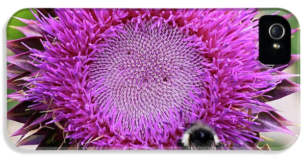 Bee On Thistle IPhone 5 Case