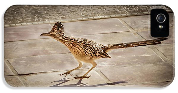 Roadrunner iPhone 5 Case - Beep Beep by Robert Bales
