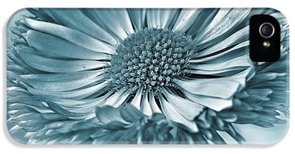 Bellis In Cyan  #flower #flowers IPhone 5 Case by John Edwards
