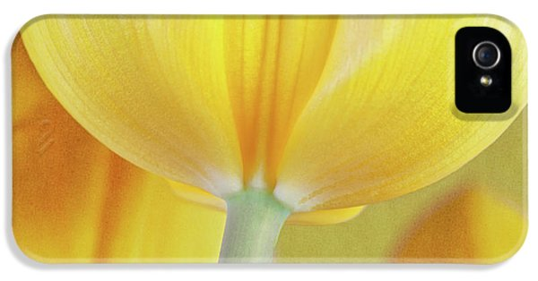 Beneath The Yellow Tulip IPhone 5 / 5s Case by Tom Mc Nemar
