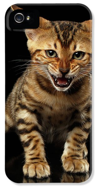 Bengal Kitty Stands And Hissing On Black IPhone 5 Case by Sergey Taran