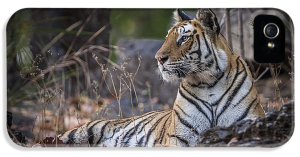 Bengal Tiger IPhone 5 Case by Hitendra SINKAR