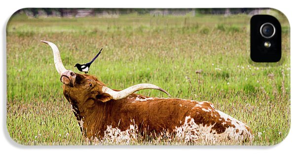 Best Friends - Texas Longhorn Magpie IPhone 5 Case by TL Mair