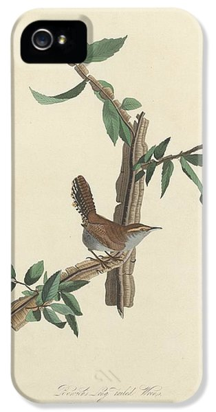 Bewick's Long-tailed Wren IPhone 5 Case