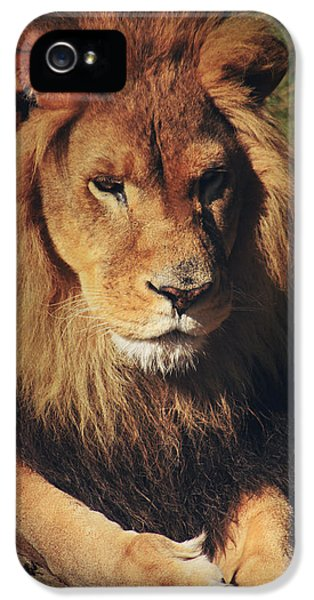 Mane iPhone 5 Cases - Big Boy iPhone 5 Case by Laurie Search