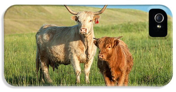 Cow iPhone 5 Case - Big Horn, Little Horn by Todd Klassy