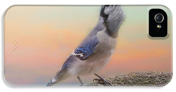 Bluejay iPhone 5 Case - Big Mouthful by Susan Capuano