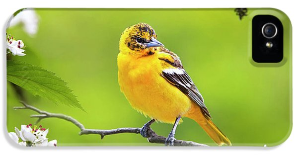 Bird And Blooms - Baltimore Oriole IPhone 5 / 5s Case by Christina Rollo