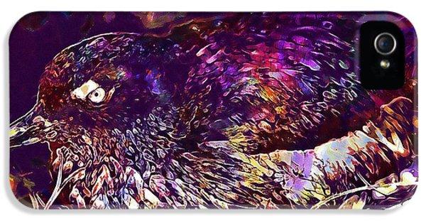 Auklets iPhone 5 Case - Bird Cassins Auklet Crested Birds  by PixBreak Art