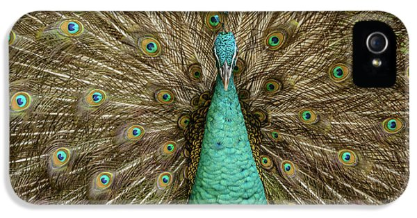 IPhone 5 Case featuring the photograph Peacock by Werner Padarin