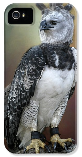 Bird Of Prey IPhone 5 Case by David and Carol Kelly
