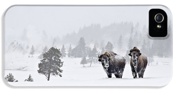 IPhone 5 Case featuring the photograph Bison In The Snow by Gary Lengyel