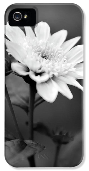IPhone 5 Case featuring the photograph Black And White Coreopsis Flower by Christina Rollo