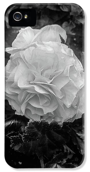 Black And White Rose IPhone 5 Case by Britten Adams