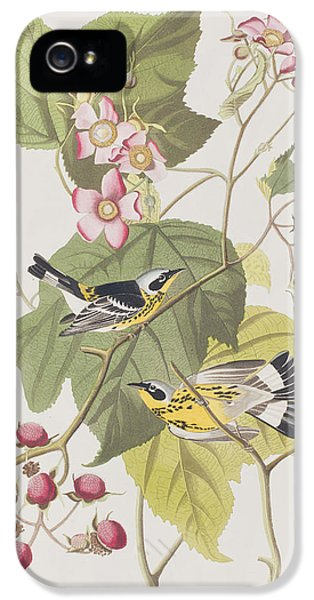 Black And Yellow Warblers IPhone 5 Case by John James Audubon