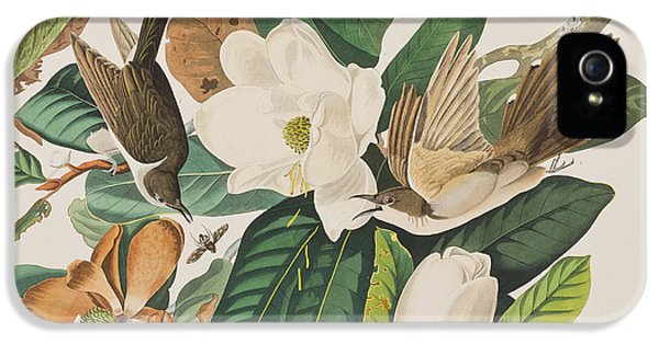 Black Billed Cuckoo IPhone 5 / 5s Case by John James Audubon