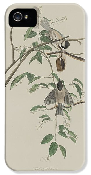 Titmouse iPhone 5 Case - Black-capped Titmouse by Dreyer Wildlife Print Collections