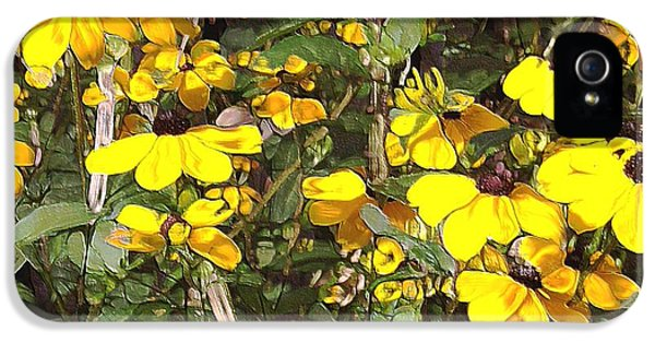 Black-eyed Susan IPhone 5 Case by Terence Morrissey