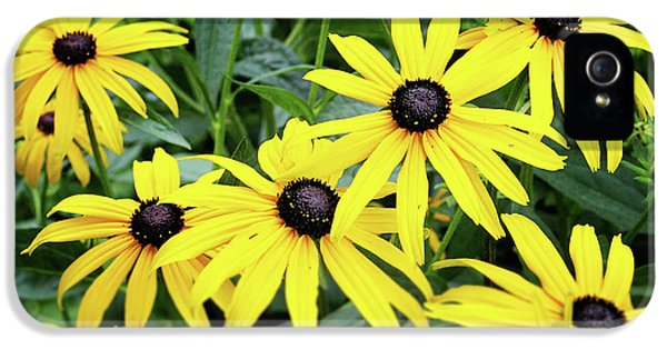 Daisy iPhone 5 Case - Black Eyed Susans- Fine Art Photograph By Linda Woods by Linda Woods