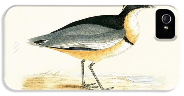Black Headed Plover IPhone 5 / 5s Case by English School