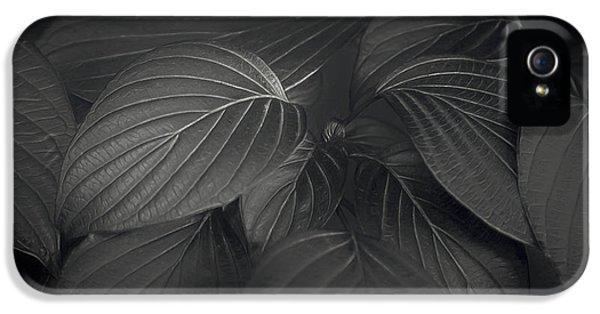 Black Leaves IPhone 5 Case by Scott Norris