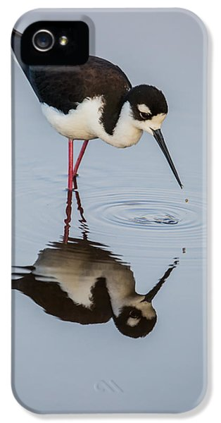 Black-necked Stilt Reflection IPhone 5 Case by Andres Leon