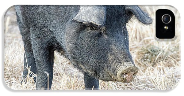 IPhone 5 Case featuring the photograph Black Pig Close-up by James BO Insogna