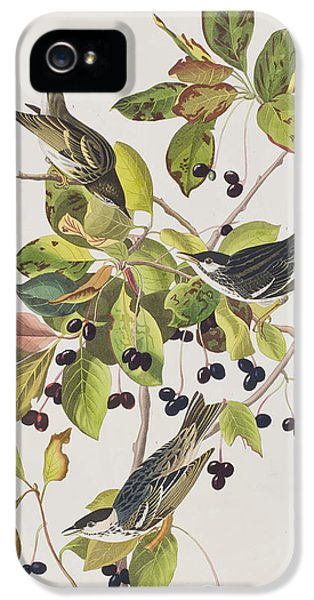 Black Poll Warbler IPhone 5 Case by John James Audubon