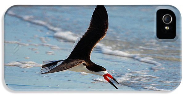 Black Skimmer IPhone 5 Case by Barbara Bowen