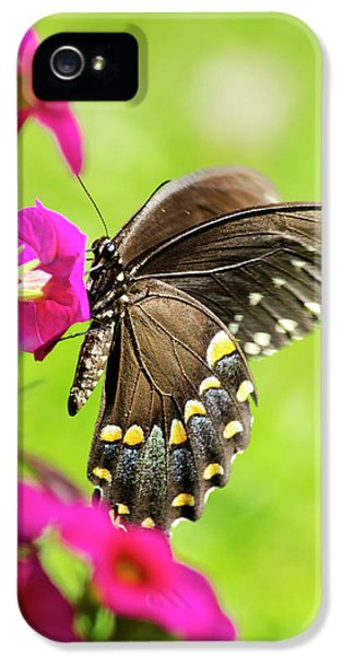 IPhone 5 Case featuring the photograph Black Swallowtail Butterfly by Christina Rollo