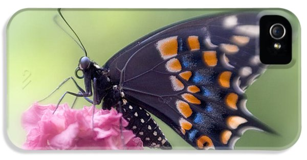 Black Swallowtail Butterfly IIi IPhone 5 Case