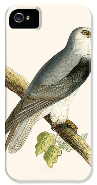 Black Winged Kite IPhone 5 / 5s Case by English School