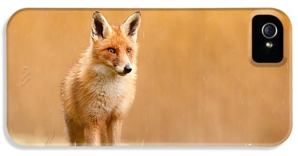 Blending In Or Standing Out - Red Fox And Yellow Reed IPhone 5 Case