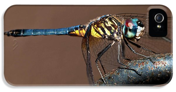 Blue And Gold Dragonfly IPhone 5 Case by Christopher Holmes