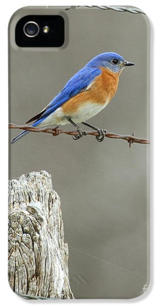 Blue Bird On Barbed Wire IPhone 5 Case by Robert Frederick